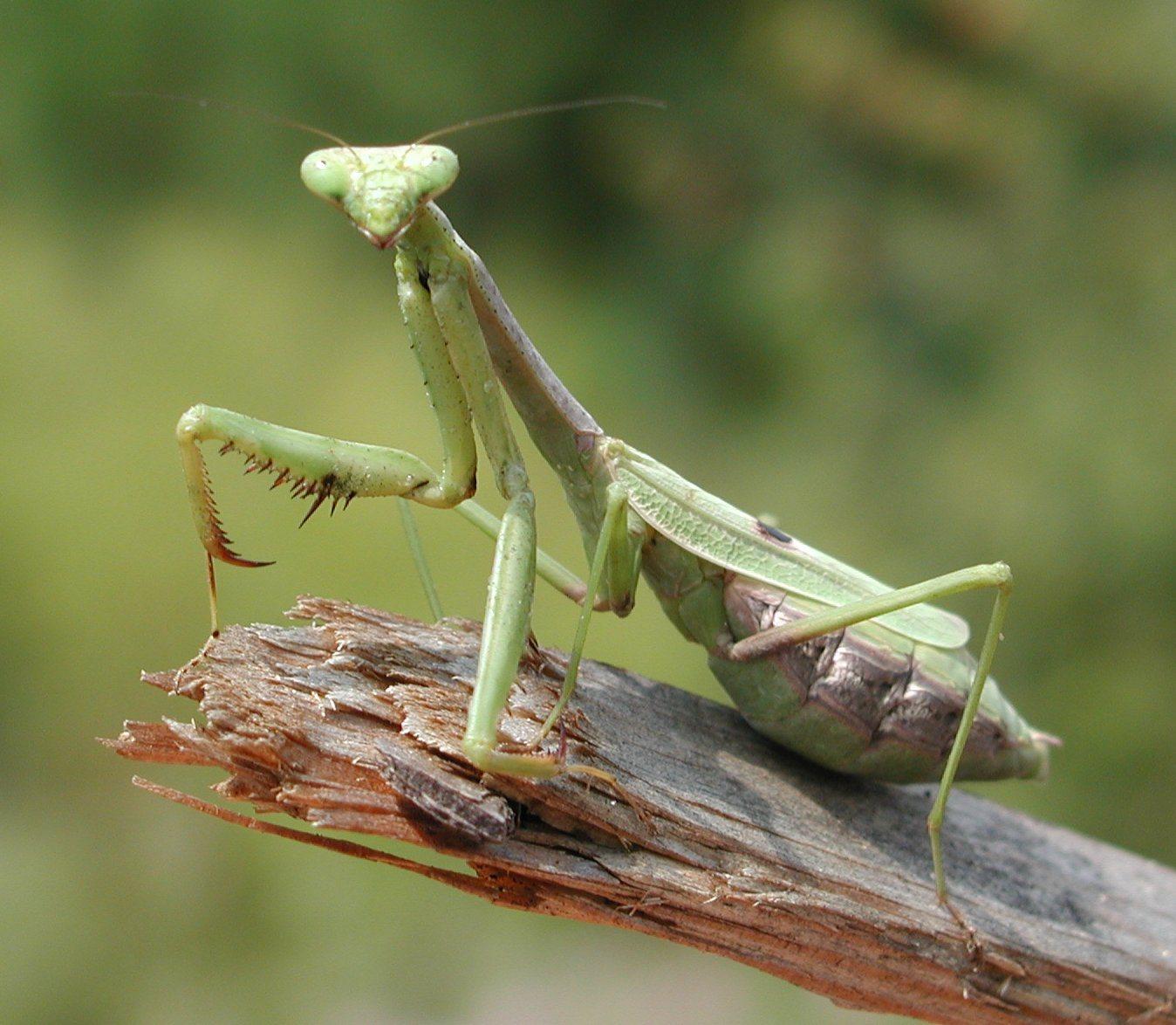 Hay Animales Invertebrados Terrestres  Por Ejemplo  Las Hormigas